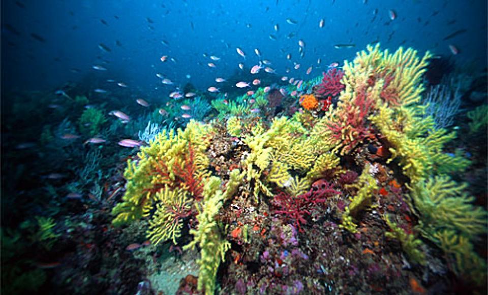 DIVE TRIPS- scuba diving Málaga, throughout the costa del sol
