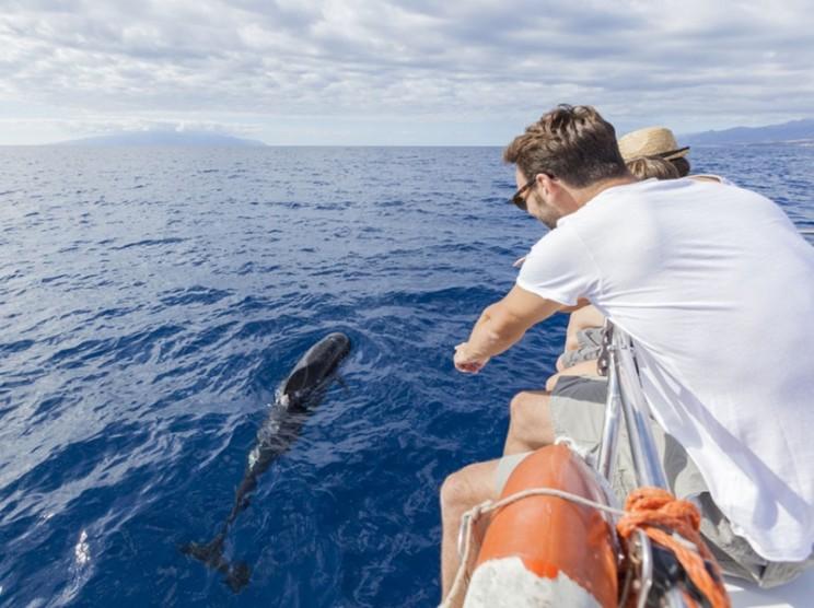 avistamiento-cetaceos-gal04